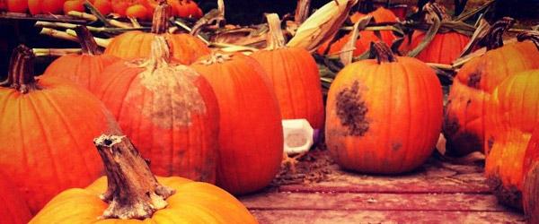 pumpkin_feat
