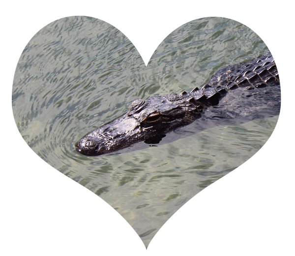 I heart alligators.