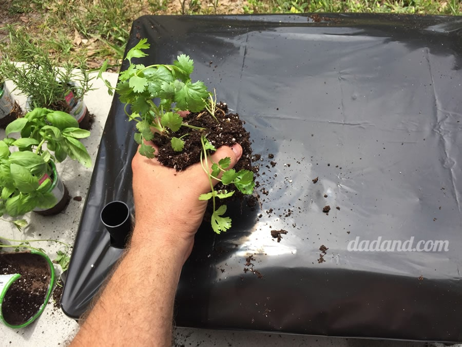 Dad blog builds patio garden bed for herbs