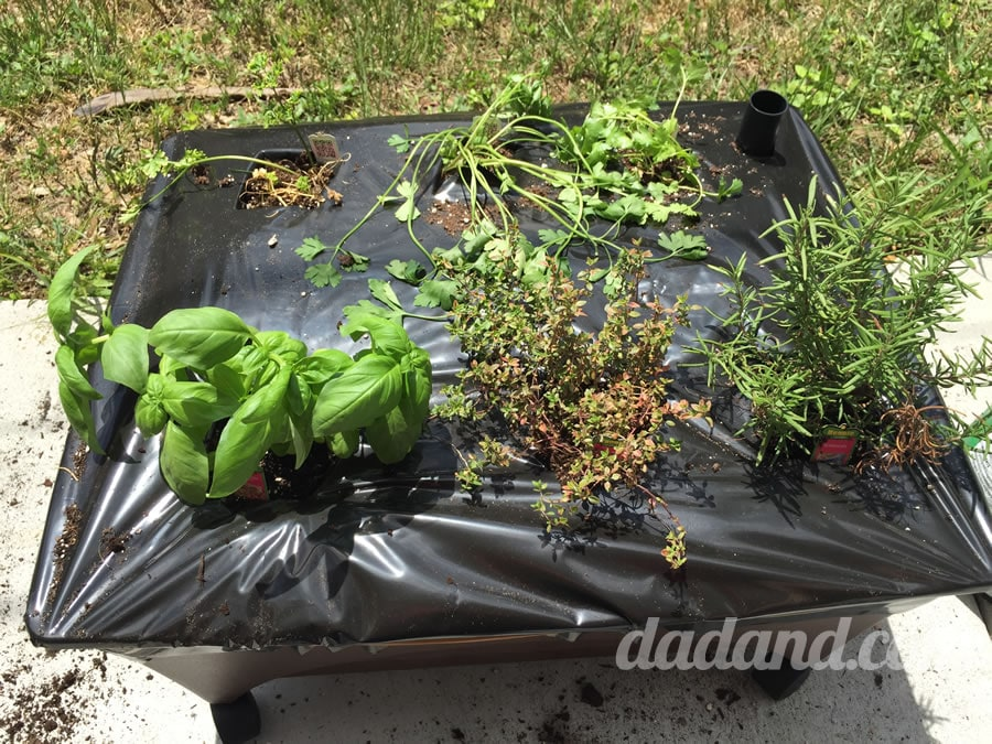Dad blog paints a container garden of herbs
