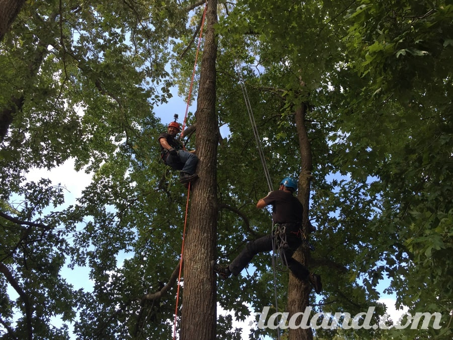 "After doing a bunch of really dangerous stuff, the Stihl team said, ""Hey, these arborists are going to show you how to climb these 80ft. trees…let's go!"" Pete made it to the top. Then started swinging from one tree to another. I got like 15ft. up and my acrophobia kicked in."